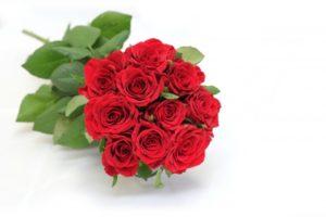 赤色の薔薇