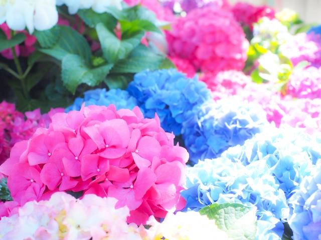 ブルベ夏の色